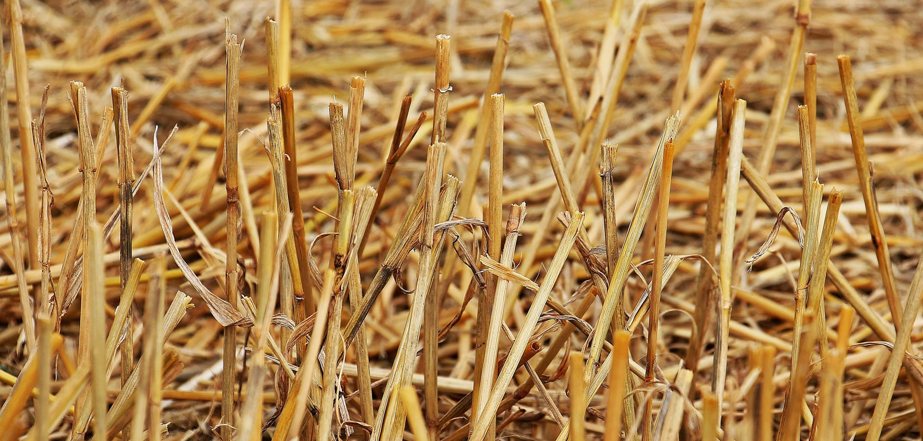stubble-harvest-straw-agriculture-158198.jpeg